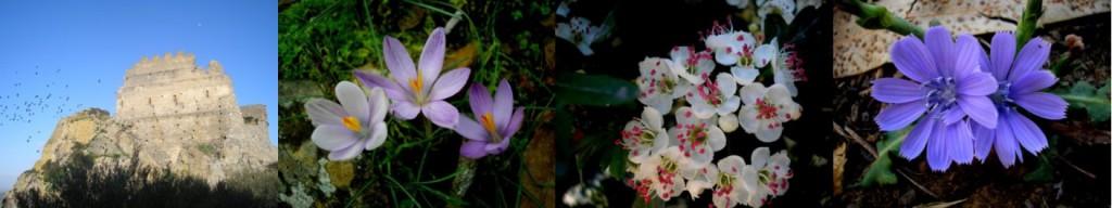 floradisardegna.it di grazia secci